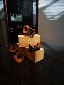 restaurante exclusivo en Valencia -Trompetilla negra cruda Apicius Valencia
